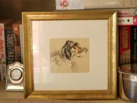 English Setter - colour head 1930's print by Lucy Dawson- Set D3